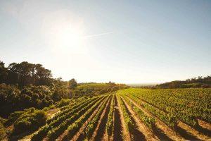 melhores vinícolas de Gramado