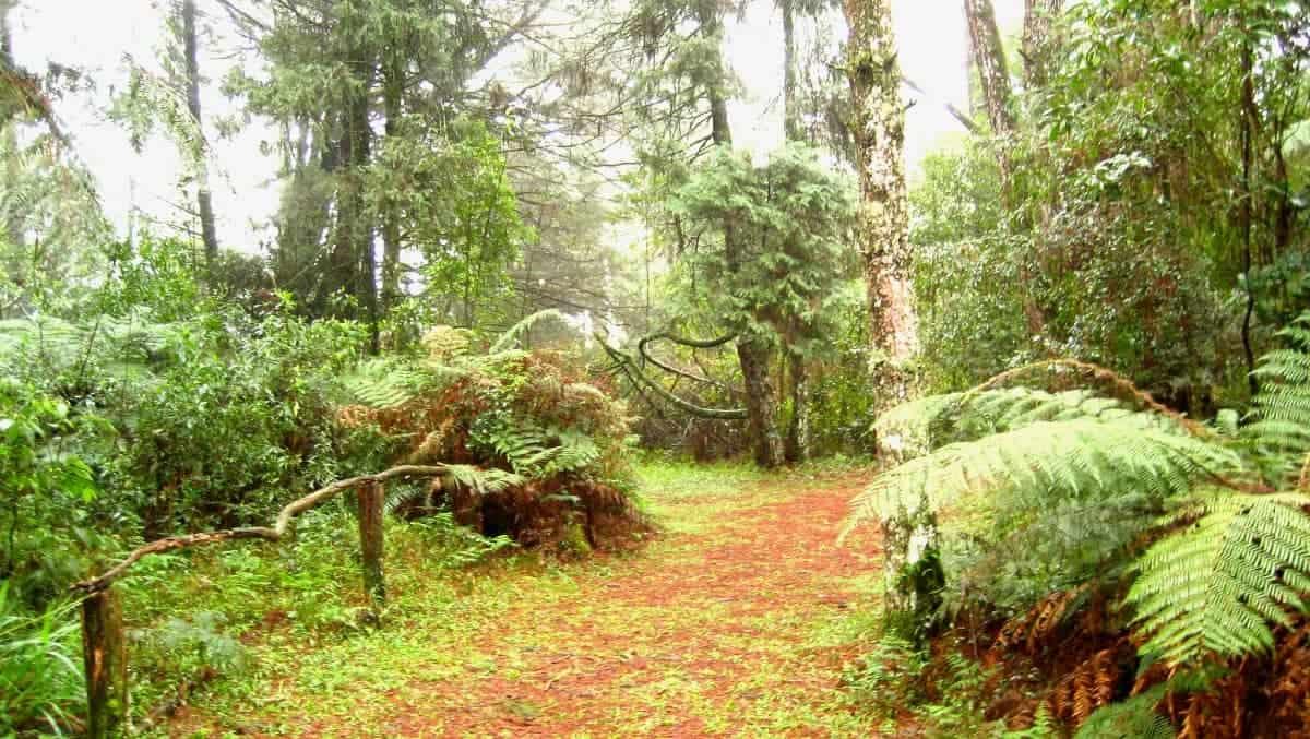 parque das sequoias gramado