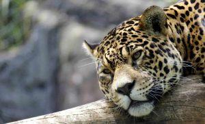 zoológico de gramado vale a pena