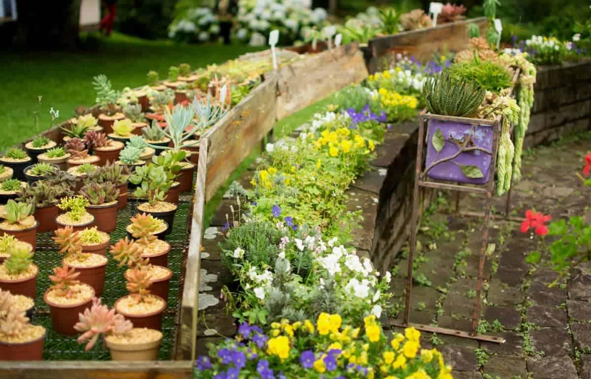 flores disponíveis no le jardin