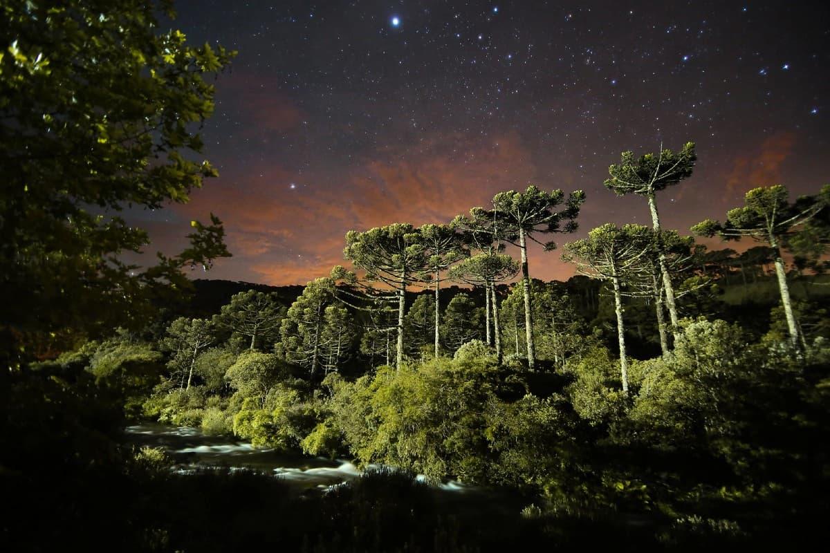 floresta araucária São José dos Ausentes
