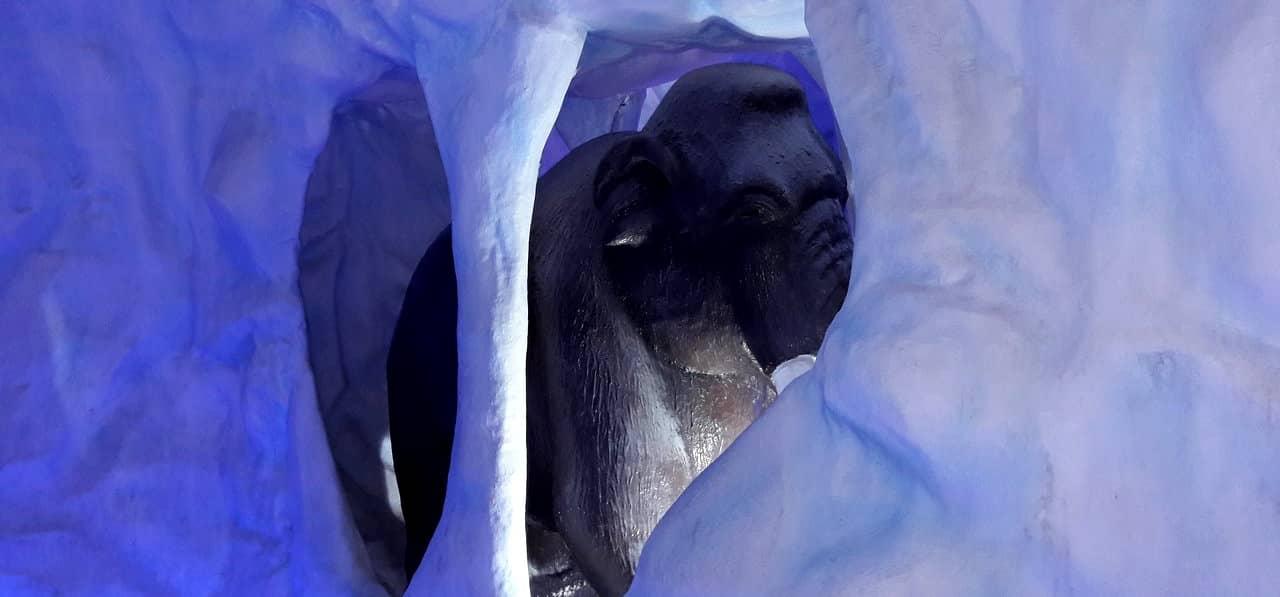 mamute na área gelada