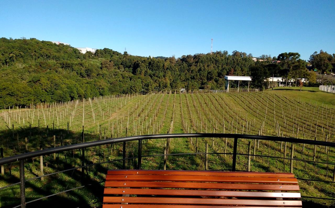 vinicola chandon