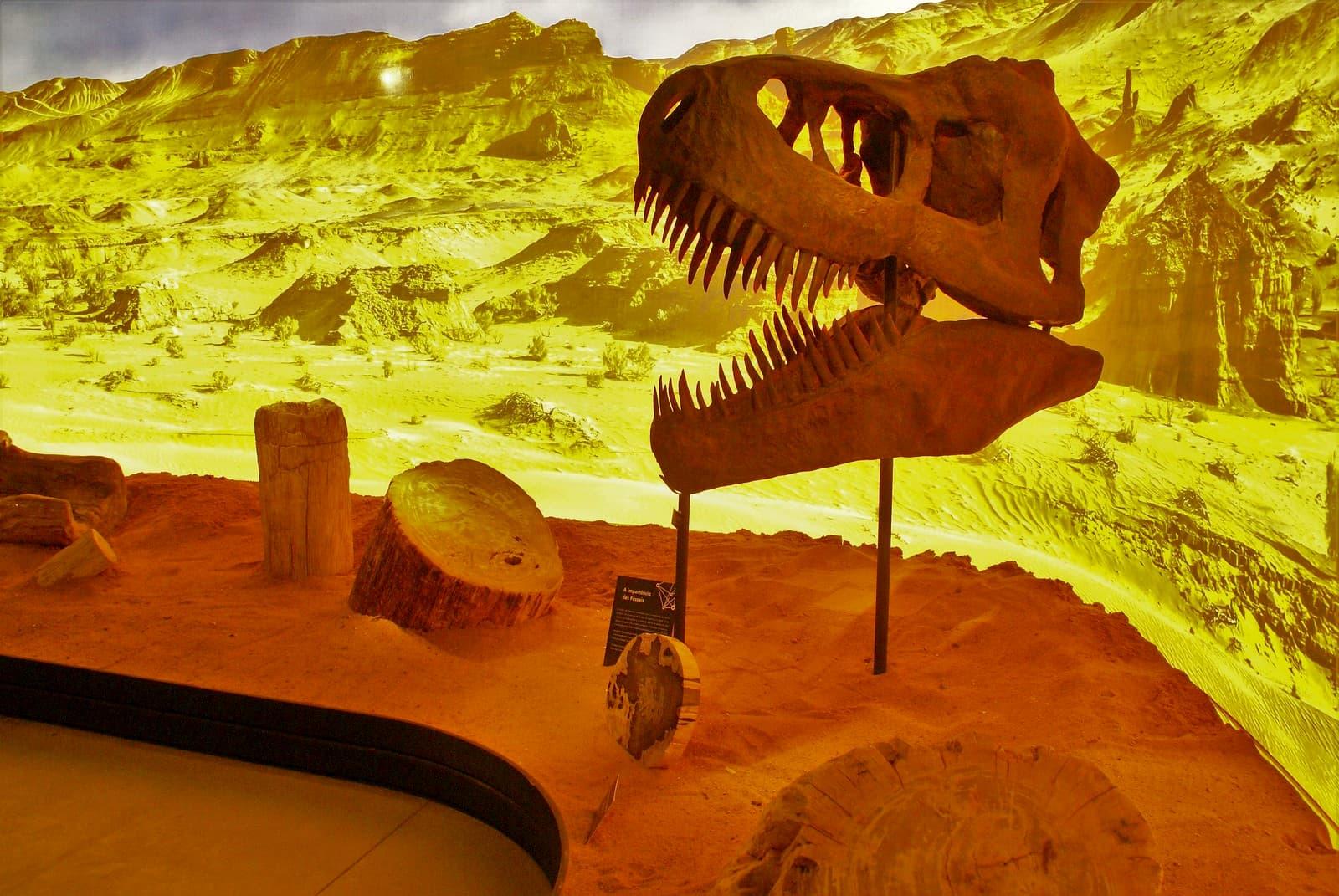 dinossauro em exposição no geo museu